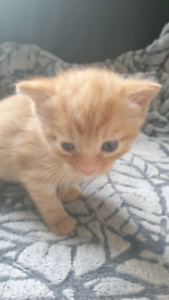 2 x kittens for sale