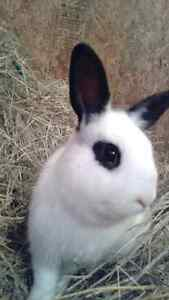Lapin a Donner