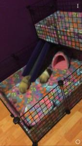Guina pig/bunny c&c cage OBO