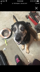 Zeus, available through 4Champ Animal Rescue