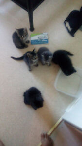 Free kittens to good homes Peterborough Peterborough Area image 1