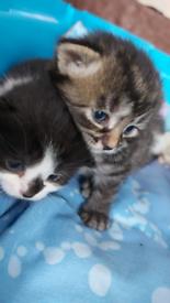4 kitten for sale!