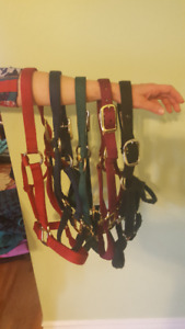 Horse Halters! Great price!