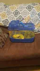 Hamster / Gerbil Cage St. John's Newfoundland image 2