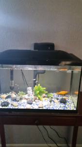 Fish tank with guppies and 1 molly