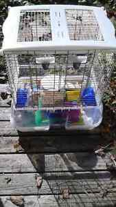 Bird, gerbil, hamster, animal cage