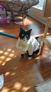 Boots - Lost Male Cat - Black and White Shorthair London Ontario image 1