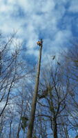 Tree Service (even in winter!) - contact for a free quote