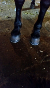 Farrier available beginning of April