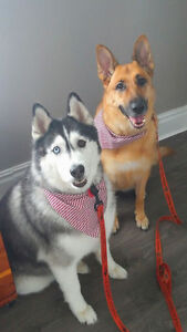 Dog Grooming in Tavistock Stratford Kitchener Area image 1