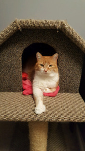 Cat looking for a loving new home