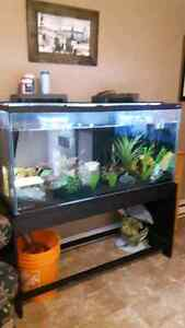 80 gal complete setup  NEW PRICE (SOLD )