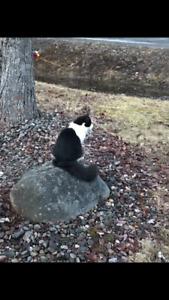 Missing black/white cat