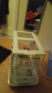 3 zebra finches for sale with cage