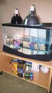 Red Ear Slider Turtle and Neccessities for SALE