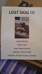 Lost dog  please contacts