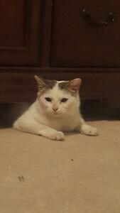 Found female cat in Brintnell Edmonton Edmonton Area image 1