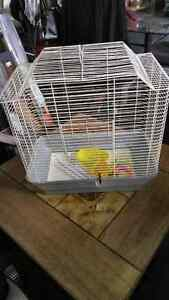 Medium to larger size birdcage with accessories  $10