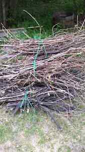 Free wood for camp fires