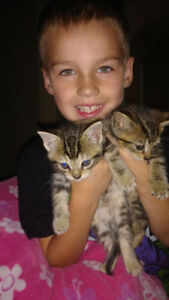 2 kittens need a home