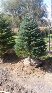Landscape trees available.