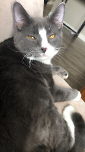 Free 8 months old male cat needs new home