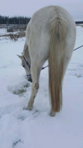 17 year old mare needs a good home.
