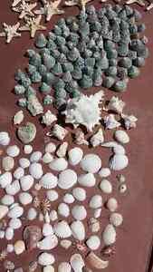 coquillages/étoile de mer/mariage Gatineau Ottawa / Gatineau Area image 4