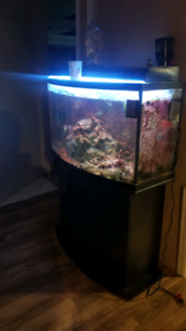 Saltwater fish and or 75 gallon tank