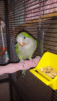 Tray's Parrot Rescue