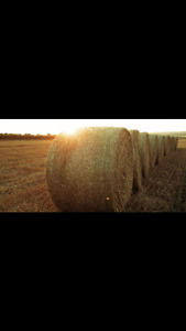 For sale Rd. Timothy hay & Rd. Minced 2cut hay