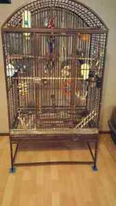 3 cockatiels and large cage