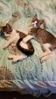 2 lovable kitties to a good home