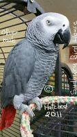 SUDBURY BIRD HOUSE (African Grey)