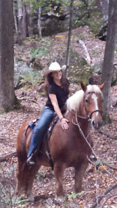 Trail Riding And Lesson Business Looking For Horses!