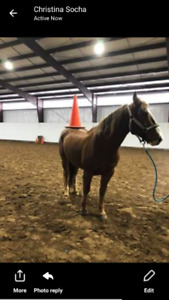 Gelding for free off property lease