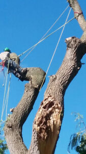Tree Pruning or Removal