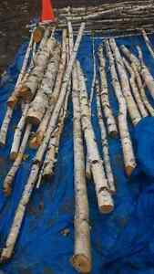 Birch branches or logs for crafting London Ontario image 4
