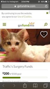 Traffic the kitten needs help!