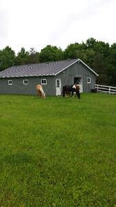 Horse boarding - Indoor/Outdoor