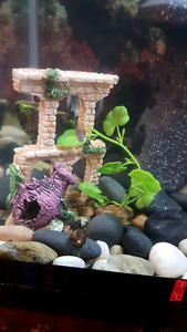 Need snails to clean your tank.....!?!?!