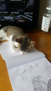 1 YEAR OLD AND 4 MTH OLD KITTENS FOR REHOMING