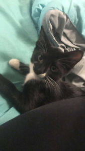 Looking for a new home for my kitten