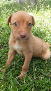 Four Beautiful puppies for adoption !