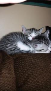 Vaccinated kittens seeking loving homes