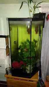 Hexagon fish tank stand adopt or rehome pets in ontario for 35 gallon fish tank
