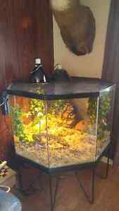 Ball Python + One of a Kind Enclosure!