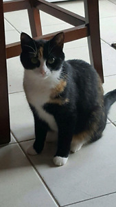 2 year old cat in need of loving home.