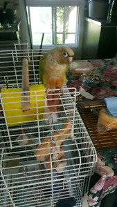 Pet bird sitter birds parrot bunny fishes macaw 24/7 AVAILABLE