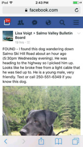 Lost Black boxer/lab male. 6 years old missing oct 29 2017
